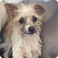 Adopt A Pet :: A377746 - San Antonio, TX