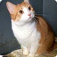 Adopt A Pet :: Cam in Ct - Manchester, CT