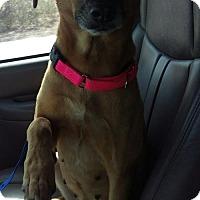 Adopt A Pet :: Uschi - Mesa, AZ