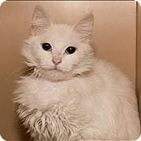Adopt A Pet :: Fantastica - Birmingham, AL