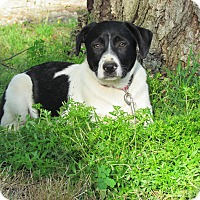 Adopt A Pet :: MILES - Hartford, CT