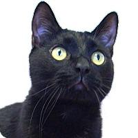 Adopt A Pet :: Scout - Colorado Springs, CO