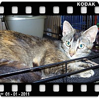 Adopt A Pet :: DARMA - Medford, WI
