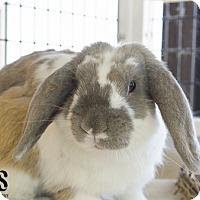 Adopt A Pet :: Spock - Burlingame, CA