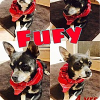 Adopt A Pet :: Fufy - DeForest, WI