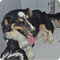 Adopt A Pet :: peter - Midvale, UT