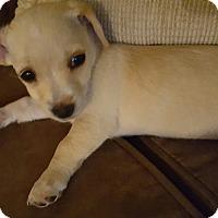 Adopt A Pet :: Norma - Thousand Oaks, CA