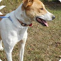 Adopt A Pet :: Toby - Allentown, NJ