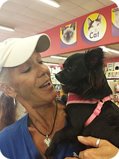 Chihuahua Mix Dog for adoption in Englewood, Florida - Blacky