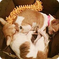 Adopt A Pet :: Tamara/Tia - Kennesaw, GA
