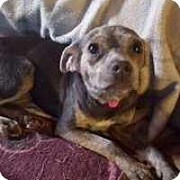 Adopt A Pet :: Zoey - Berwick, PA