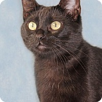 Adopt A Pet :: Pumps - Encinitas, CA