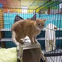 Adopt A Pet :: Hogan - Chicago, IL