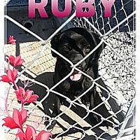 Adopt A Pet :: Ruby - Donaldsonville, LA