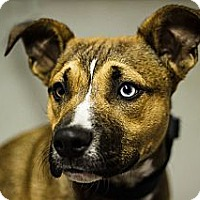Adopt A Pet :: carson - Cleveland, OH