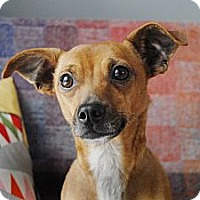 Adopt A Pet :: Charlie - Milan, NY