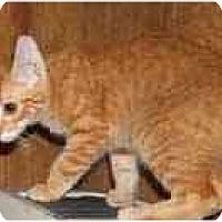 Adopt A Pet :: Golden Shield - Dallas, TX