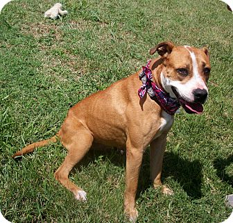 Rescue dogs in paducah ky topix