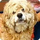 Adopt A Pet :: BERNADETTE (video)