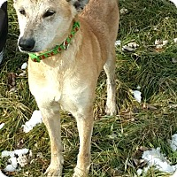 Adopt A Pet :: #550-14 RESCUED! - Zanesville, OH