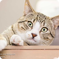 Adopt A Pet :: Cherokee - Fountain Hills, AZ