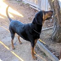 Adopt A Pet :: AJ Roscoe - Sacramento area, CA