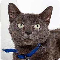 Adopt A Pet :: Stormy - San Luis Obispo, CA