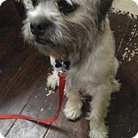 Adopt A Pet :: Willey - Ogden, UT