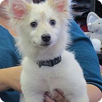 Adopt A Pet :: Topher - Manassas, VA