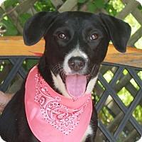Adopt A Pet :: Sasha - Garfield Heights, OH
