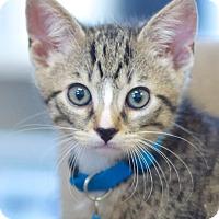 Adopt A Pet :: Monte - Marietta, GA
