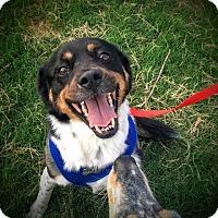 Adopt A Pet :: Lilly - Memphis, TN