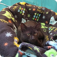 Adopt A Pet :: Ms. Binks - Coos Bay, OR