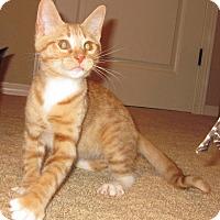 Adopt A Pet :: Jaca - Colorado Springs, CO