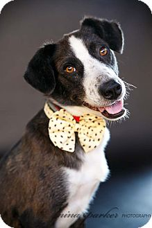 Border Collie Mix Dog for adoption in Marietta, Georgia - Junior