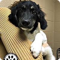 Adopt A Pet :: Jasie - Kimberton, PA