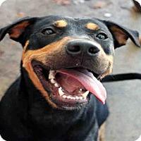 Adopt A Pet :: MISSY - Fort Walton Beach, FL