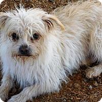 Adopt A Pet :: Carter - Spartanburg, SC