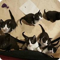Adopt A Pet :: The 7 Dwarfs - New Milford, CT