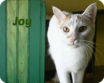 Domestic Shorthair Cat for adoption in West Des Moines, Iowa - Joy