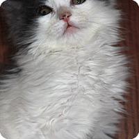 Adopt A Pet :: Dusty - Manahawkin, NJ