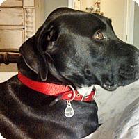 Adopt A Pet :: Tucker - Ventura, CA