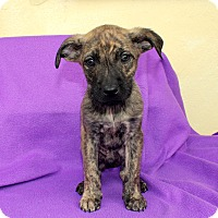 Adopt A Pet :: Quinoa - Los Angeles, CA