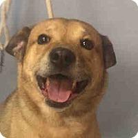 Adopt A Pet :: CODY - Philadelphia, PA