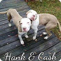 Adopt A Pet :: Hank & Cash - Mobile, AL