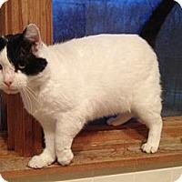 Adopt A Pet :: Salvador - Byron Center, MI