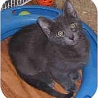 Adopt A Pet :: Nina - Dallas, TX