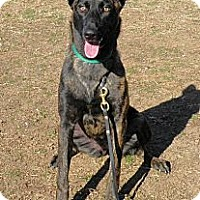 Adopt A Pet :: Amber in MD - Jamestown, CA