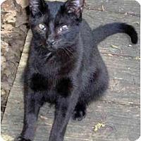 Adopt A Pet :: Neechee - Summerville, SC