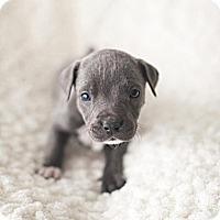 Adopt A Pet :: Finn - Owasso, OK